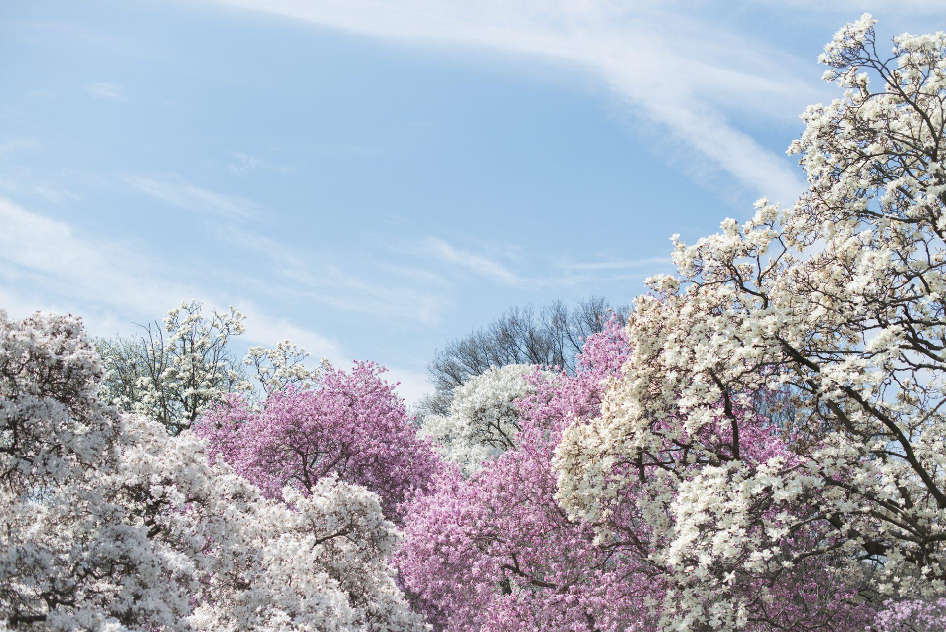 Blossom Brooklyn New York 2015